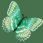 Borboletas – Borboleta Verde e Preta 4 PNG