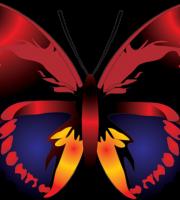 Borboletas - Borboleta Vermelha Colorida