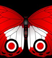 Borboletas - Borboleta Vermelha