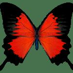 Borboletas – Borboleta Vermelha e Preta PNG