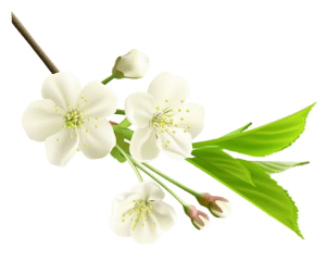 Flores - Flor Bonita Branca 6