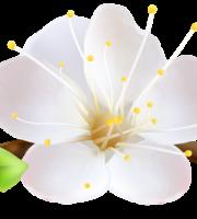 Flores - Flor Bonita Branca