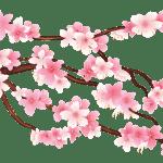 Flores – Flor Bonita Rosa 10 PNG