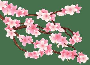 Flores - Flor Bonita Rosa 10