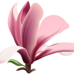 Flores – Flor Bonita Rosa 11 PNG
