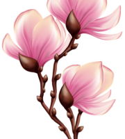 Flores - Flor Bonita Rosa 15
