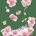Flores – Flor Bonita Rosa 16 PNG