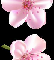 Flores - Flor Bonita Rosa 17