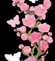 Flores - Flor Bonita Rosa 18