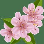 Flores – Flor Bonita Rosa 3 PNG