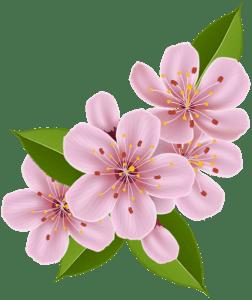 Flores - Flor Bonita Rosa 3