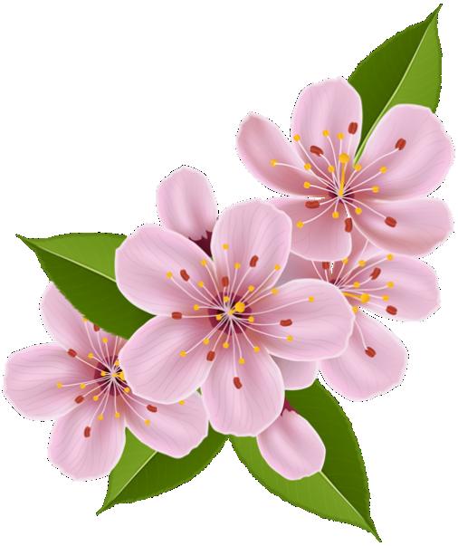 Flores Flor Bonita Rosa 3 Png Imagens E Moldescombr