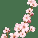 Flores – Flor Bonita Rosa 4 PNG
