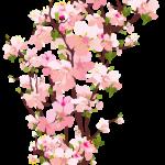 Flores – Flor Bonita Rosa PNG
