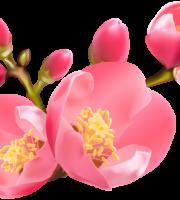 Flores - Flor Bonita Vermelha