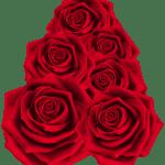 Flores – Rosa Vermelha 2 PNG
