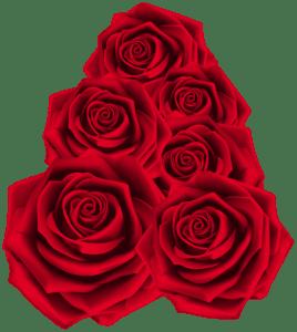 Flores - Rosa Vermelha 2