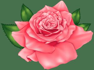 Flores - Rosa Vermelha 3