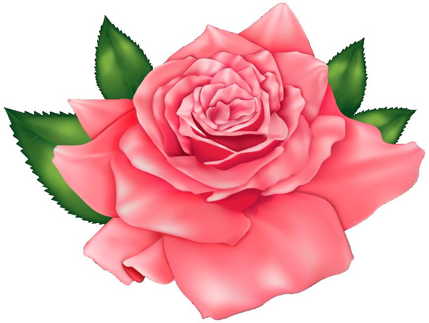 Flores Rosa Vermelha 3 Png Imagens E Moldescombr