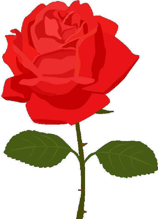 Flores Rosa Vermelha 4 Png Imagens E Moldescombr