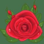 Flores – Rosa Vermelha 6 PNG