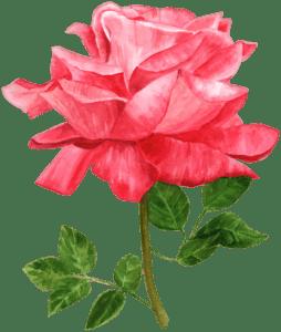 Flores - Rosa Vermelha