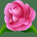 Flores – Rosa cor de Rosa 2 PNG