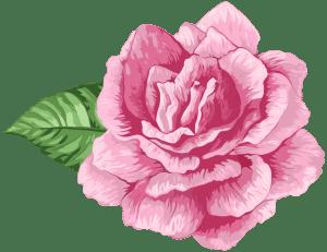 Flores - Rosa cor de Rosa 3