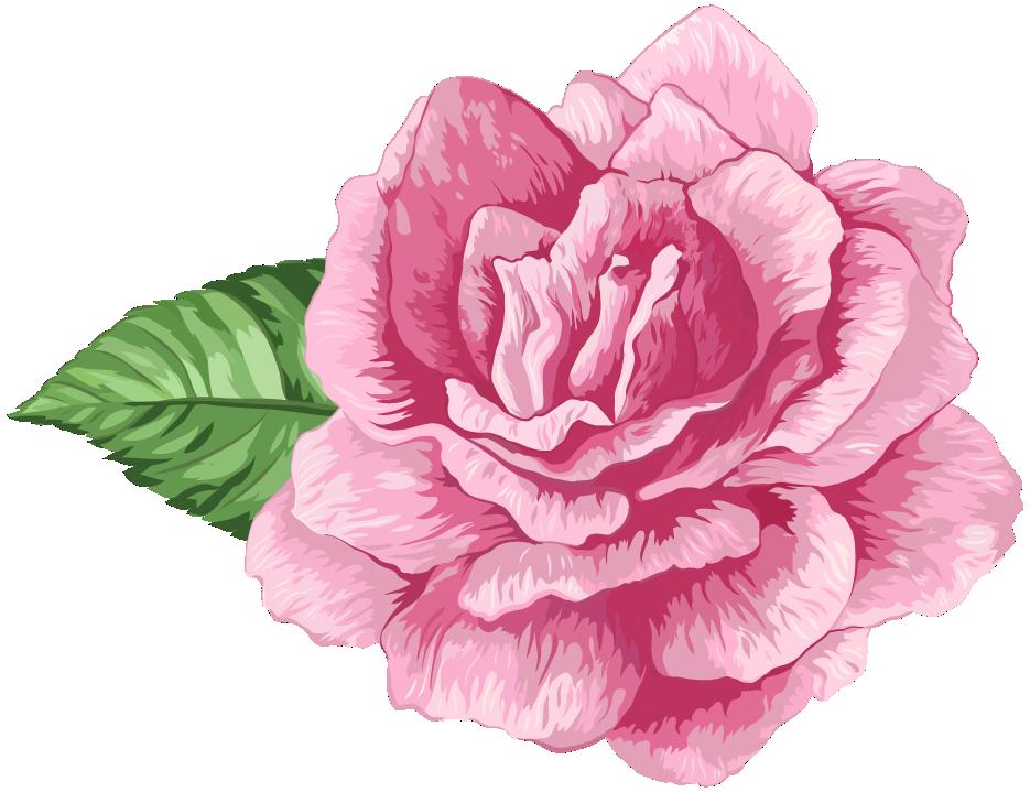 Flores Rosa Cor De Rosa 3 Png Imagens E Moldescombr