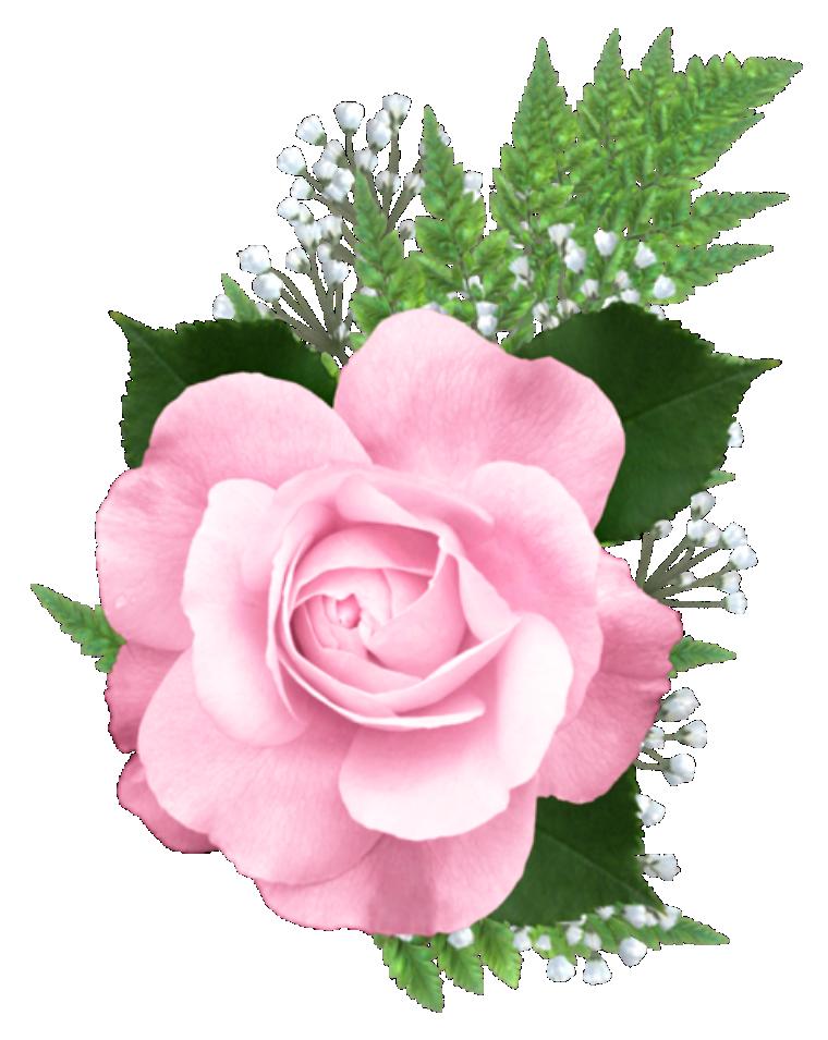 Flores Rosa Cor De Rosa 4 Png Imagens E Moldescombr
