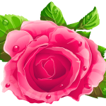 Flores – Rosa cor de Rosa 5 PNG