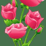 Flores – Rosa cor de Rosa 6 PNG