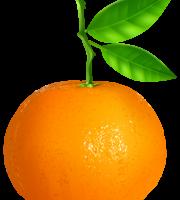 Imagem de Frutas - Laranja 2 PNG