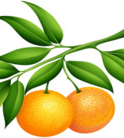 Imagem de Frutas - Laranja PNG