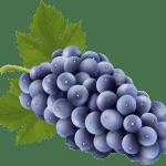 Imagem de Frutas – Uva Roxa 2 PNG
