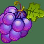 Imagem de Frutas – Uva Roxa 5 PNG