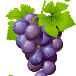 Imagem de Frutas – Uva Roxa 6 PNG