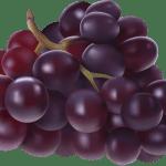 Imagem de Frutas – Uva Roxa PNG