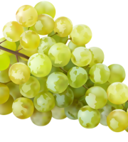 Imagem de Frutas - Uvas Verde PNG
