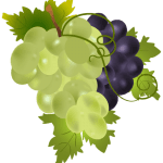 Imagem de Frutas – Uvas Verde e Roxa PNG