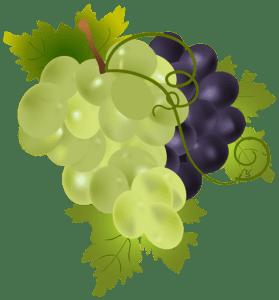 Imagem de Frutas - Uvas Verde e Roxa PNG