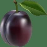 Imagem de Frutas – Ameixa 2 PNG