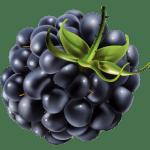 Imagem de Frutas – Amora 3 PNG