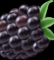 Imagem de Frutas - Amora 4