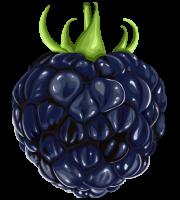 Imagem de Frutas - Amora