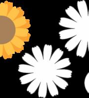 Molde de Flor para Feltro - Eva e Artesanatos