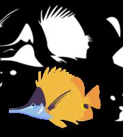 Molde de Peixe Para EVA Feltro e Artesanato 5