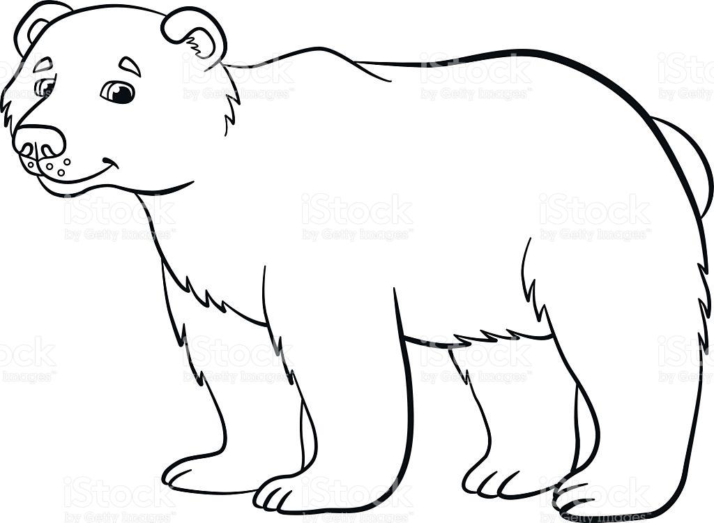 Desenhos Para Colorir Animais Selvagens