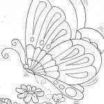 Desenhos para Colorir de Borboleta