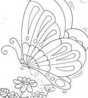 Arquivos Desenhos Para Imprimir De Borboleta